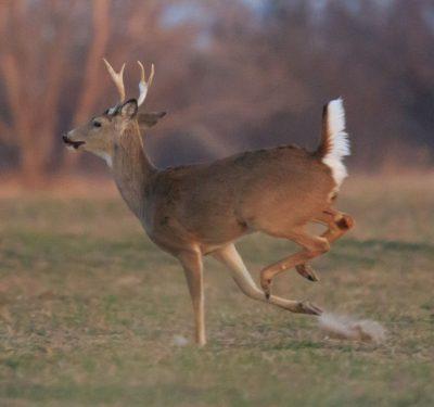 watch labeling providers run like deer